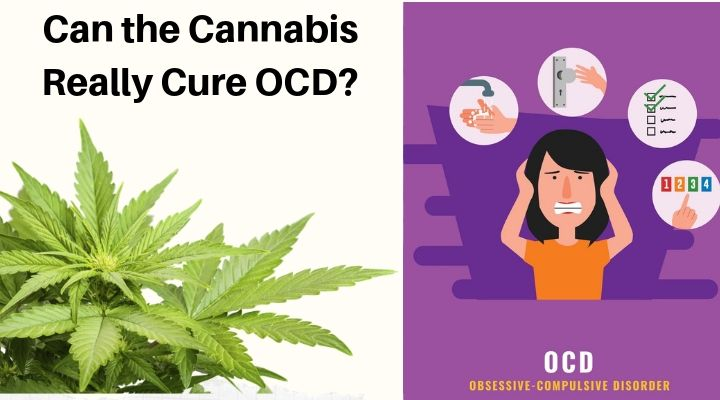 420 Med Evaluations | Can the Cannabis Really Cure OCD?