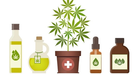 Cannabis Plant Medicine