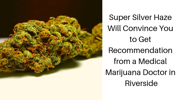 Super Silver Haze Will Convince You to Get Recommendation from a Medical Marijuana Doctor