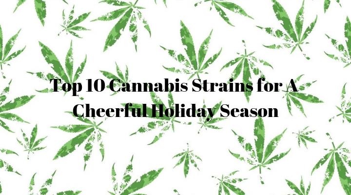 Top 10 Cannabis Strains for A Cheerful Holiday Season