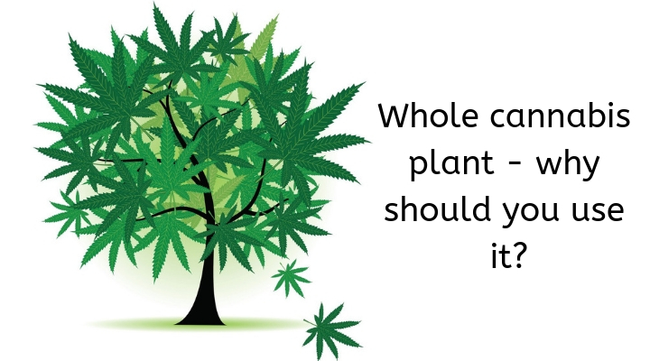 Whole Cannabis Plant – Why Should you use it?