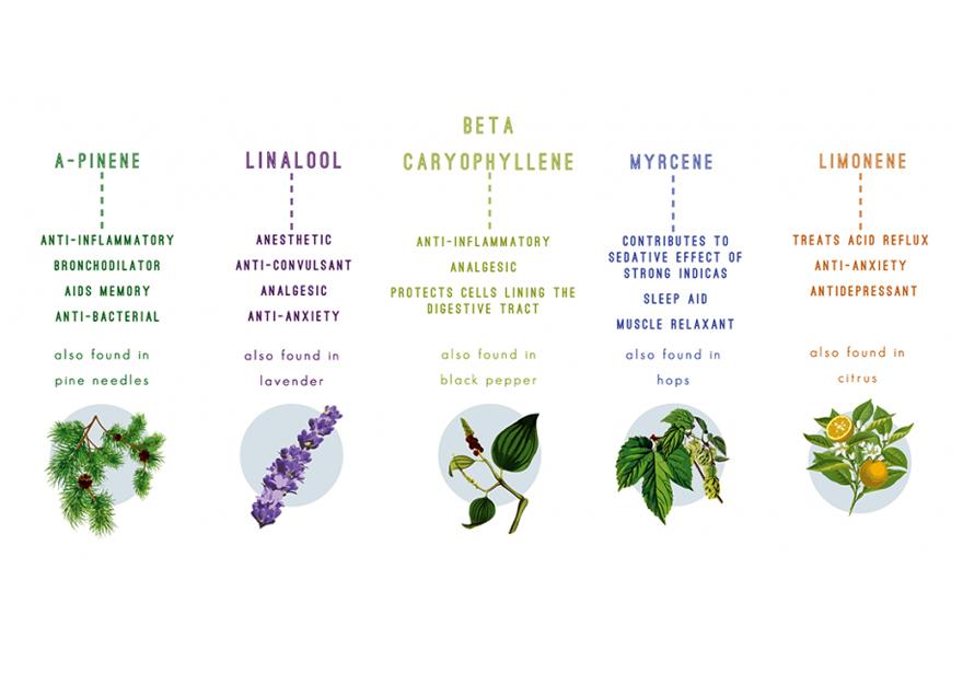 terpenes found in cannabis