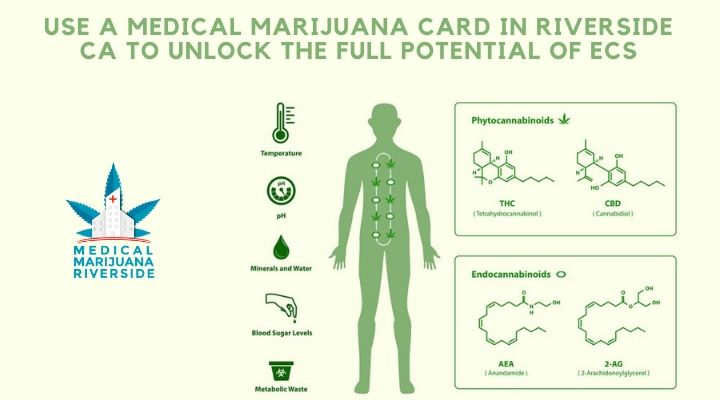 Use a medical marijuana card in Riverside CA to unlock the full potential of ECS