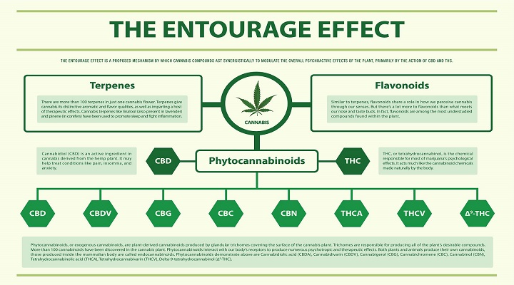 Medical marijuana Doctors can Educate you About the Entourage Effect