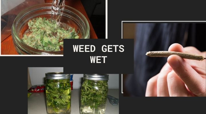 Weed gets Wet