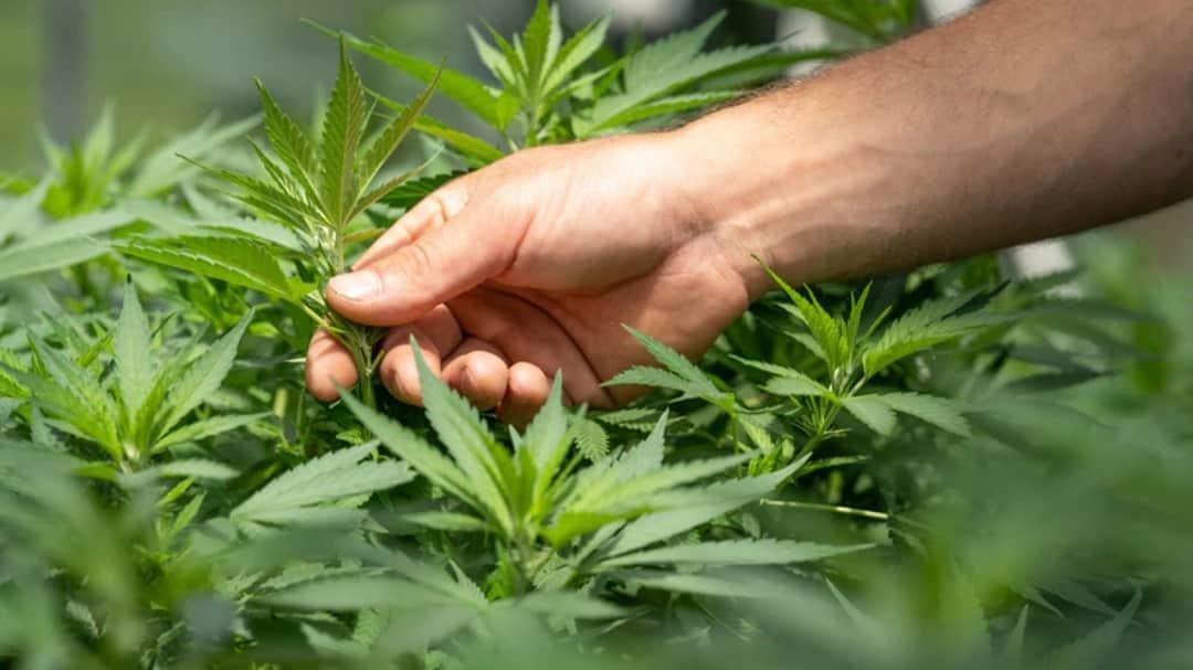 Cannabis Discreetly