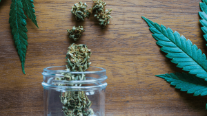 Cannabis Strains to Use for Inflammation (1)